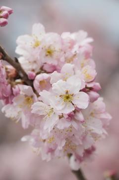 春めき日和