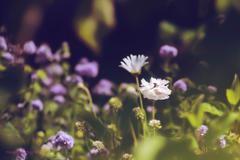 初夏のお庭から•*¨*•.¸¸♬ no.♡