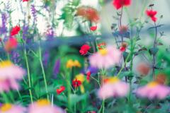 初夏のお庭から•*¨*•.¸¸♬ no.♡♡