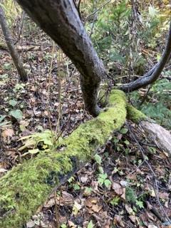 苔むした枝に…