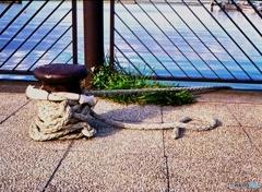夏の日の臨海公園3