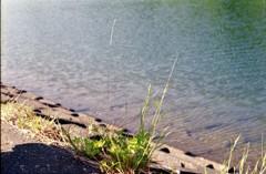 ダム湖の土手で・・・