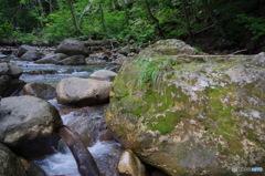 石 苔 急流