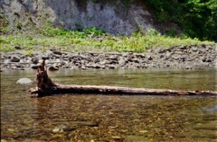河原の流木