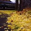 黄色い庭・・・