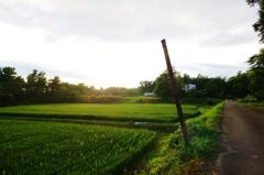 夕暮れ間近の農道で・・