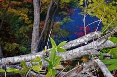 笹の下は渓谷