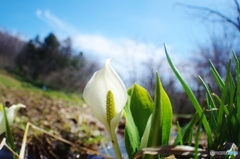 春の公園散歩