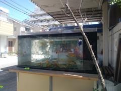 金魚の電話ボックスの跡地には…