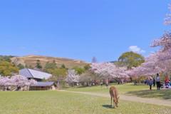 春日野の春