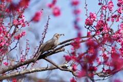 春を待ちわびる