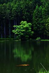 神秘の池の主