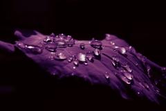 水滴の中の世界
