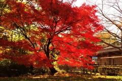 紅葉の向こう側