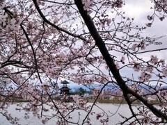 弥生の里にも春が来た