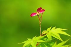 新緑に赤い竹とんぼ