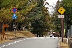 鹿の飛び出し注意