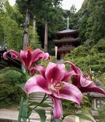 日本書紀ゆかりのお寺にて