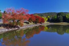 大仏池が1番美しい季節