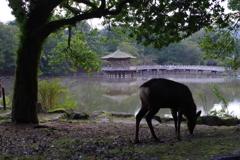 古都奈良百景 -静謐-