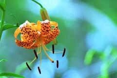 花びら、くるり