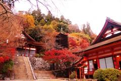 談山神社の紅葉⑤ ~Finale~