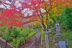 長谷寺の紅葉 ~本堂まであと半分~
