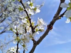 さわやかな春色