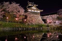郡山城の夜桜