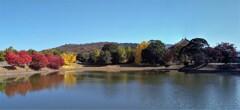 大仏池の紅葉2020