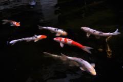 奈良のマニアックな楽しみ方