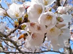春は書き入れ時