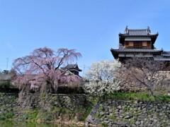 今年は、大和郡山お城まつりが開催されます。
