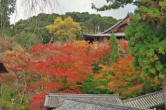 長谷寺の紅葉 ~登楼を見下ろす~