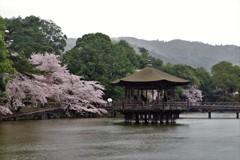 浮見堂 ~桜と春雨~