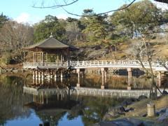 奈良公園 - 浮見堂 -