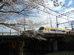 桜と伊勢志摩ライナー