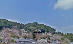 山が桜に染まる頃