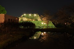 夜桜もまた良し ~天守台ライトアップ~