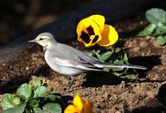 花壇の小鳥