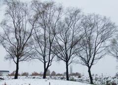 小雪の福島潟