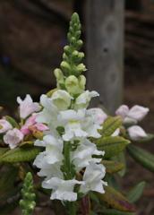 4月の花・4