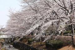 近所の春・2