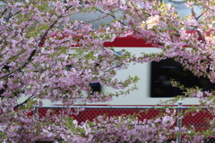 花の隙間を京浜急行