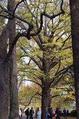 新宿御苑・4