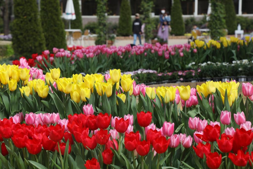 4月の花・1