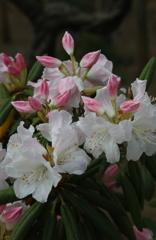 4月の花・2