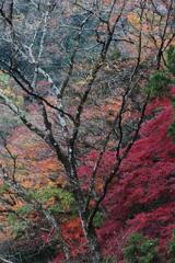 袋田の滝・3