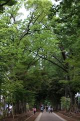 氷川神社・1