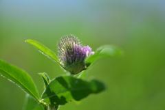 野畑の小さな花1